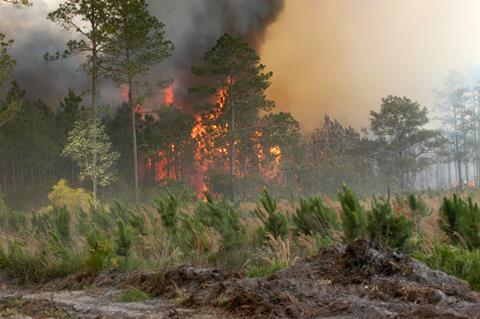 Bugaboo forest fire